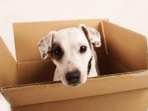 addison pet friendly apartment for rent